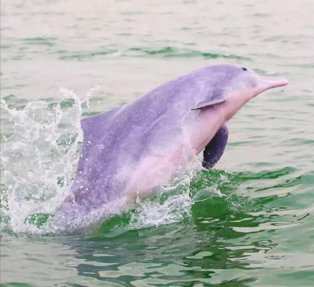 海豚淘宝 海豚姐姐买海鲜淘宝店-元珍商城
