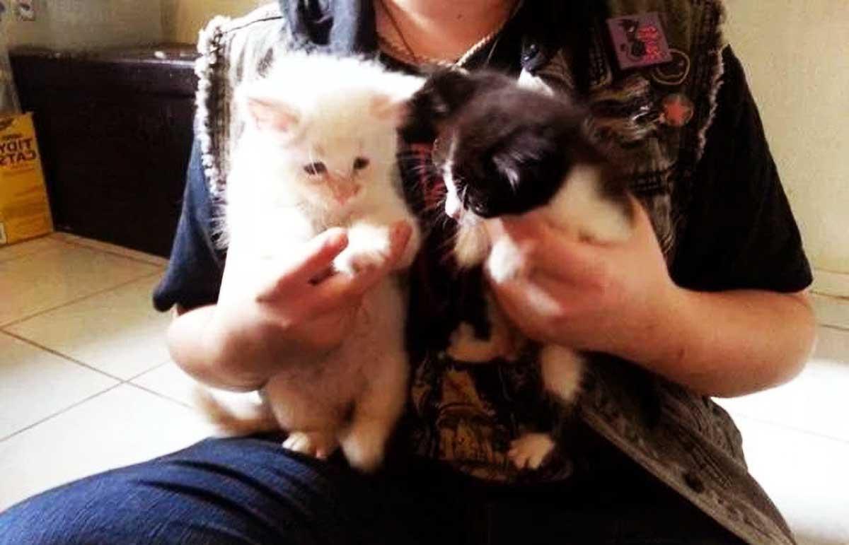 原创 两只小猫感情深厚,命运却将它俩分开,当再次见面时,感人泪流!