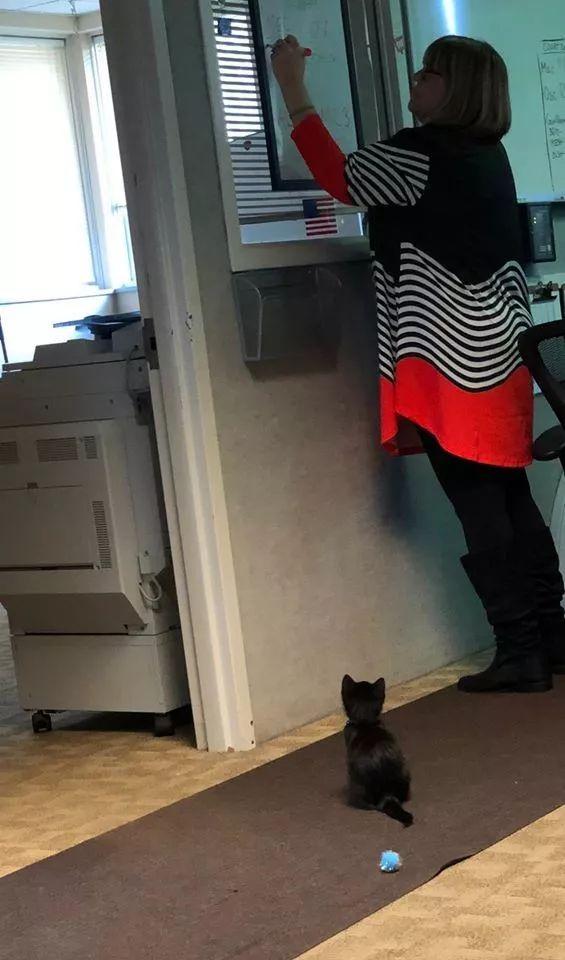 虚弱猫咪找911调度中心求救,却被任命为调度中心主任!