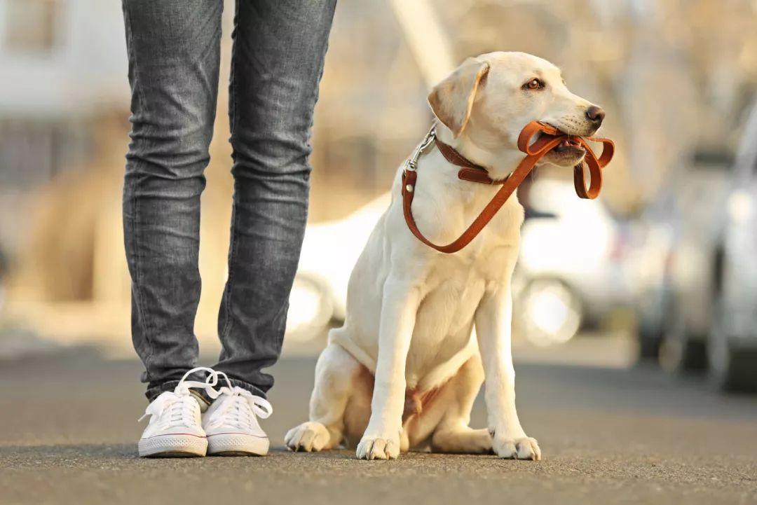 最新狗龄换算公式,算算你家狗子相当于几岁的人