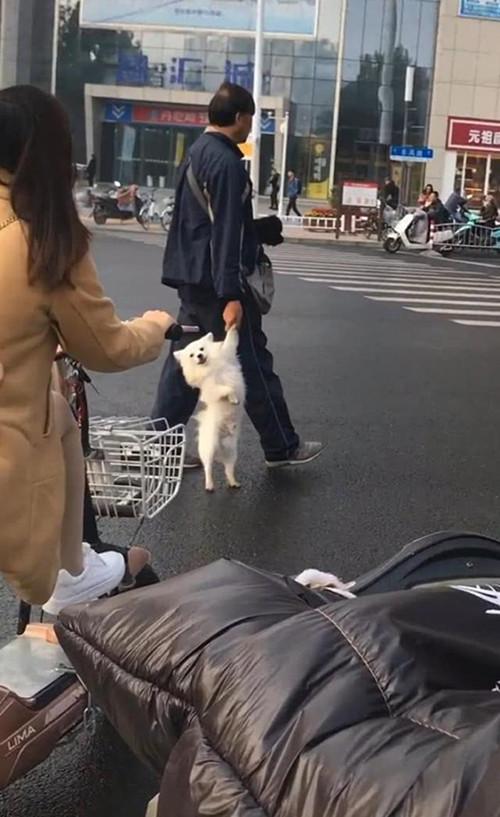 原创 大爷拎着狗过马路,以为是虐待,拉近镜头后却只想点赞了