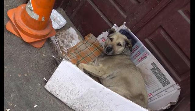 原创 主人因车祸意外去世,狗狗被带走后又偷跑回来,守在家门口一年!