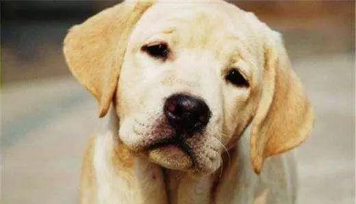 狗狗多大算老了?它们变老有哪些征兆?