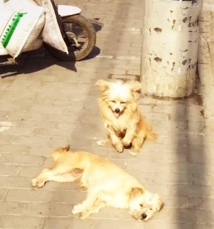 原创 公狗做错事,引母狗生气,随后公狗的1个举动,让众人笑出猪叫声