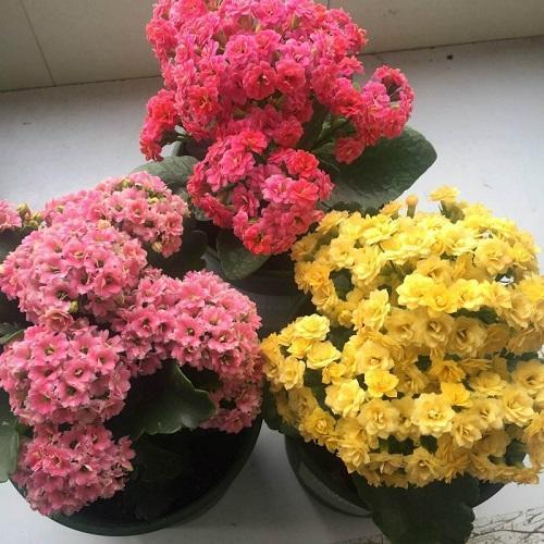 """这2种花""""偷懒""""养,记住""""3少"""",花量更多冬季赏到别样美景"""