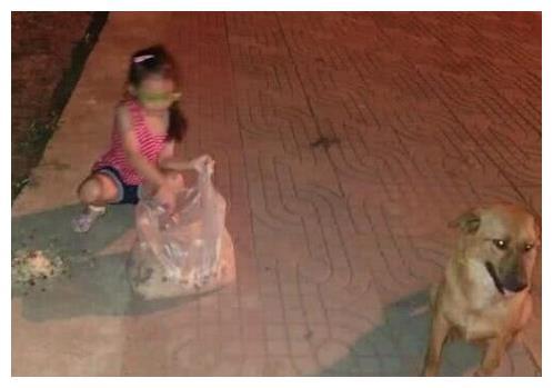 家里开餐馆,小女孩每天带剩饭喂流浪狗,狗狗报恩的行为感动路人