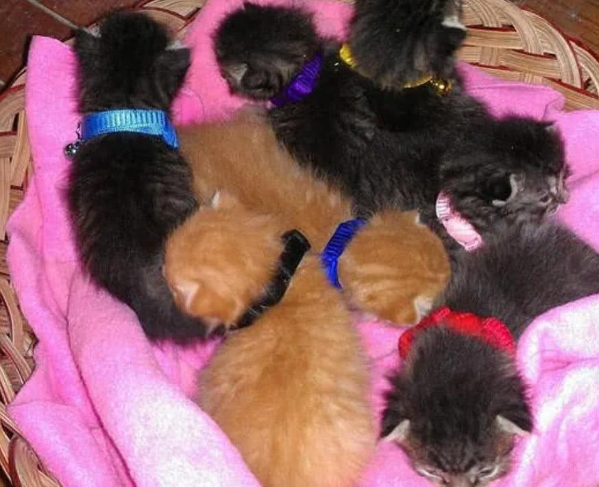 家猫生了七只小孩,带孩子太累,家中狗狗亲自上阵帮忙