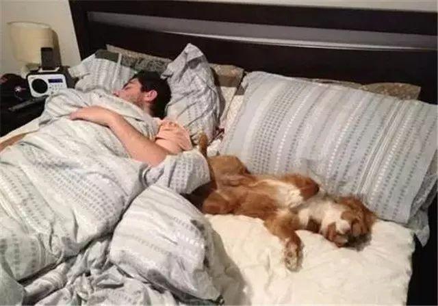 我起不了床的原因只有一个,狗睡我旁边呢!