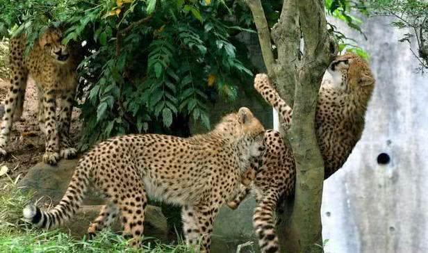女子看到树上有只奇怪的豹子,镜头放大后一看,却发现糗大了