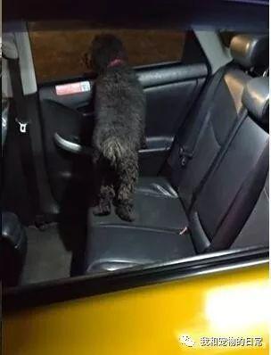 计程车司机突然听到后座发出怪声,转头看到的画面让他当场吓傻!