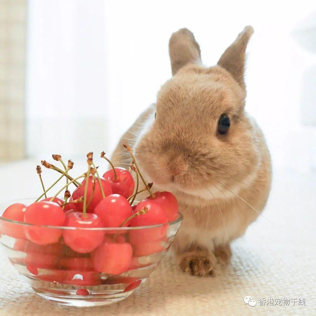世界上为什么会有那么可爱的兔兔!