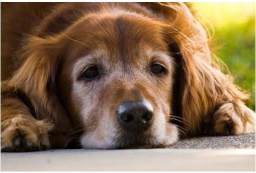 狗狗一生的5个阶段,你有陪伴它吗?宠主:不想那一天的到来