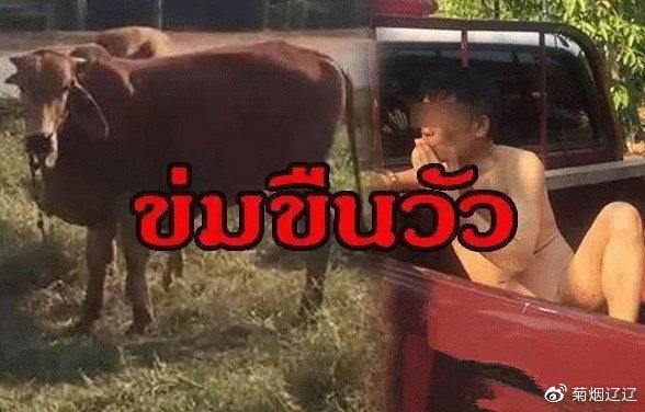印度男与怀孕母牛发生关系...政府竟判决「与母牛结婚」还举办婚礼!网笑翻:后悔了吗?