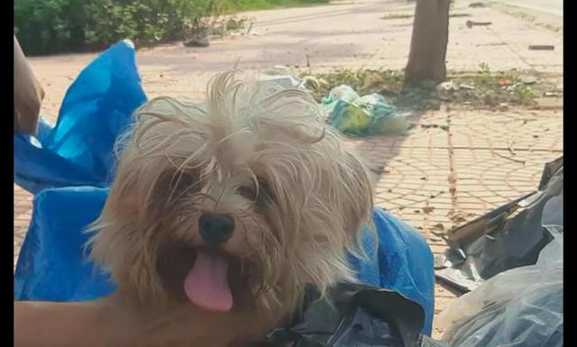 原创 狗狗被主人装进袋子里遗弃,好心男子救它后,有了天翻地覆的变化