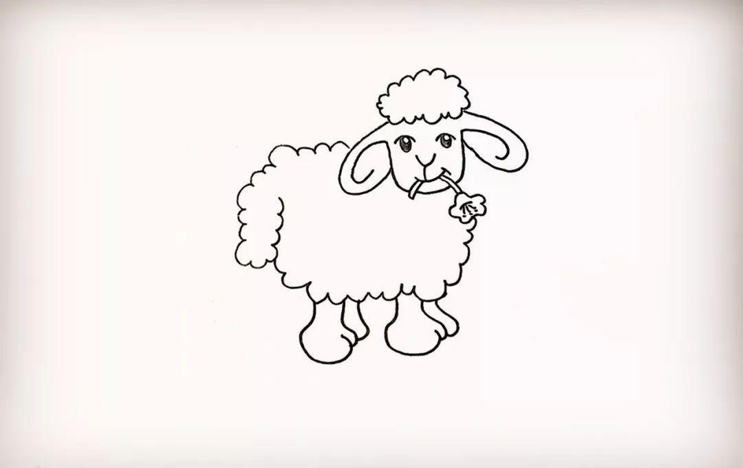 简笔画 小绵羊