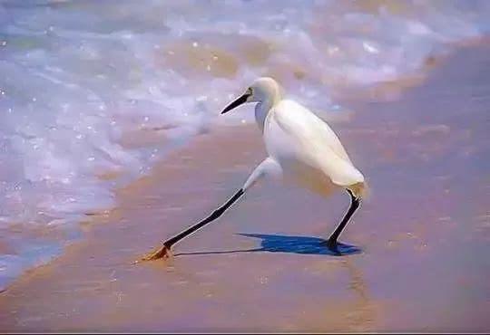 爆笑!动物搞笑照片做成GIF是这样的,这脑洞得给满分! _段子