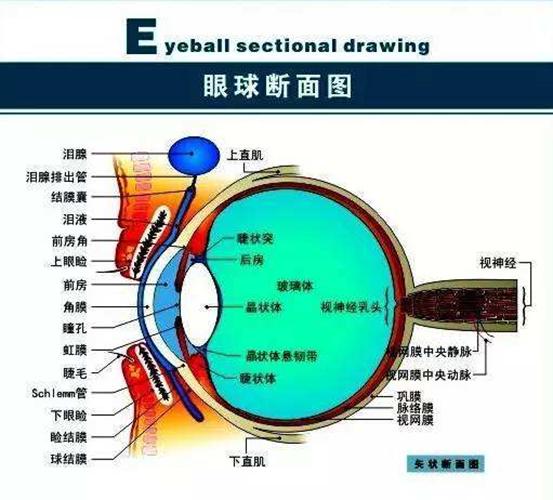 """眼科专家谈""""女童眼睛被塞几十张纸片"""":不可能,不科学"""