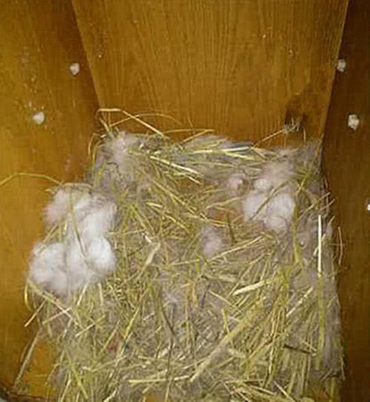 原创 品阅优4男子发现兔子有做窝行为,以为它怀孕了,医生的诊断却让他无语