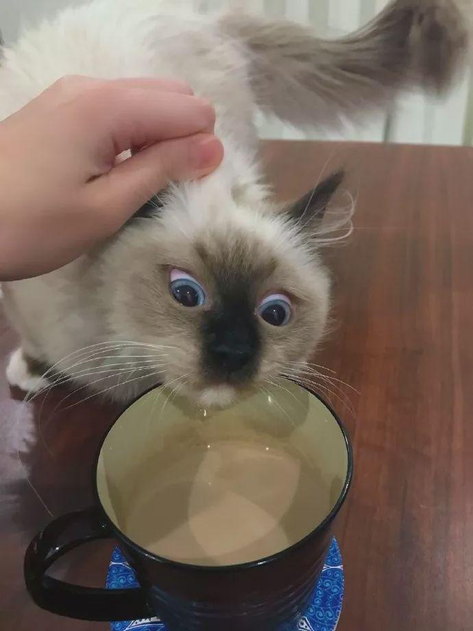 猫咪撸其他小动物的样子像极了第一次撸猫的你
