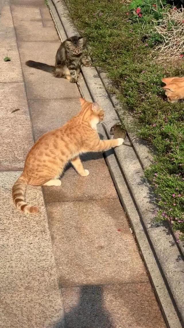 原创 一群猫围在花池旁,女子放大画面后笑喷,老鼠:出门没有看黄历