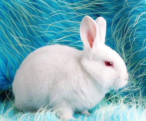 【养宠经验分享】盐水洗兔子的耳螨能好吗,兔子的耳螨
