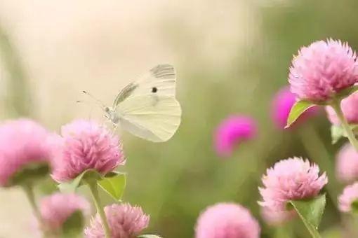 ▶_一首《歌在飞情在追》,_百听不厌!