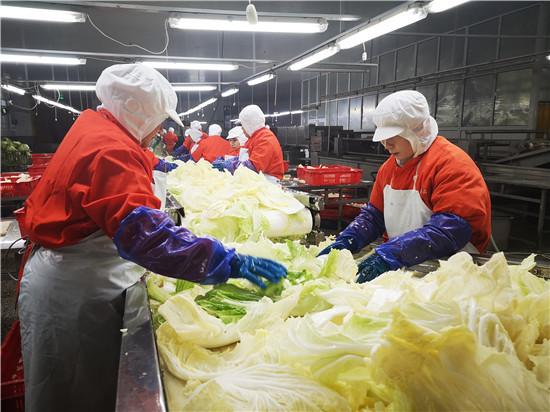 山東膠州:120余個農產品品牌,對農業經濟貢獻率超6成_青島
