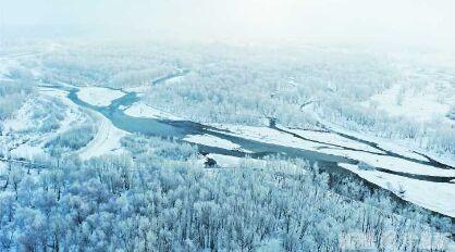 【新疆是個好地方】醉美雪樺_哈巴河縣