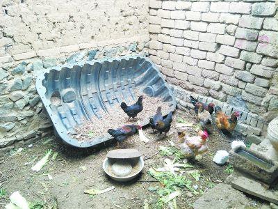 化糞池變成了雞食槽、儲物柜、水缸蓋_改廁