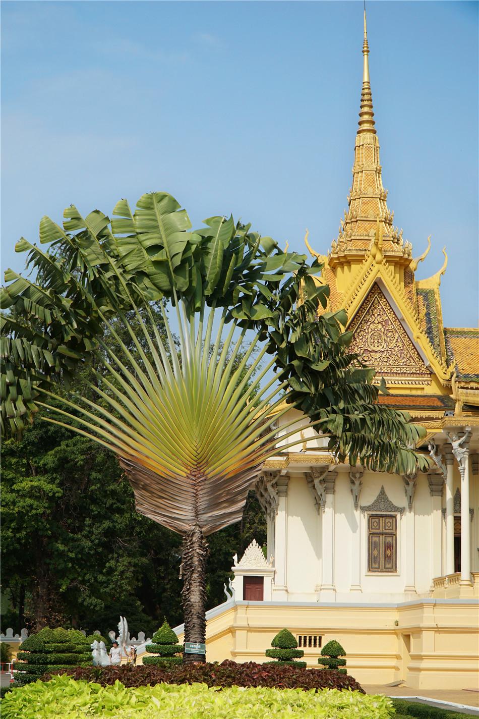 """柬埔寨:金边市,宏伟的宫殿,一张""""网红脸""""具有极高的美"""