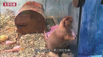 北京:多商场内设动物园卫生条件堪忧动物扎堆圈养有安全隐患