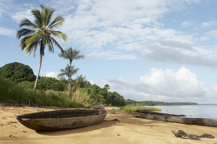 南美国家,中国,官话,旅游,马罗尼,河流,苏里南共和国,棕榈,特价,热带