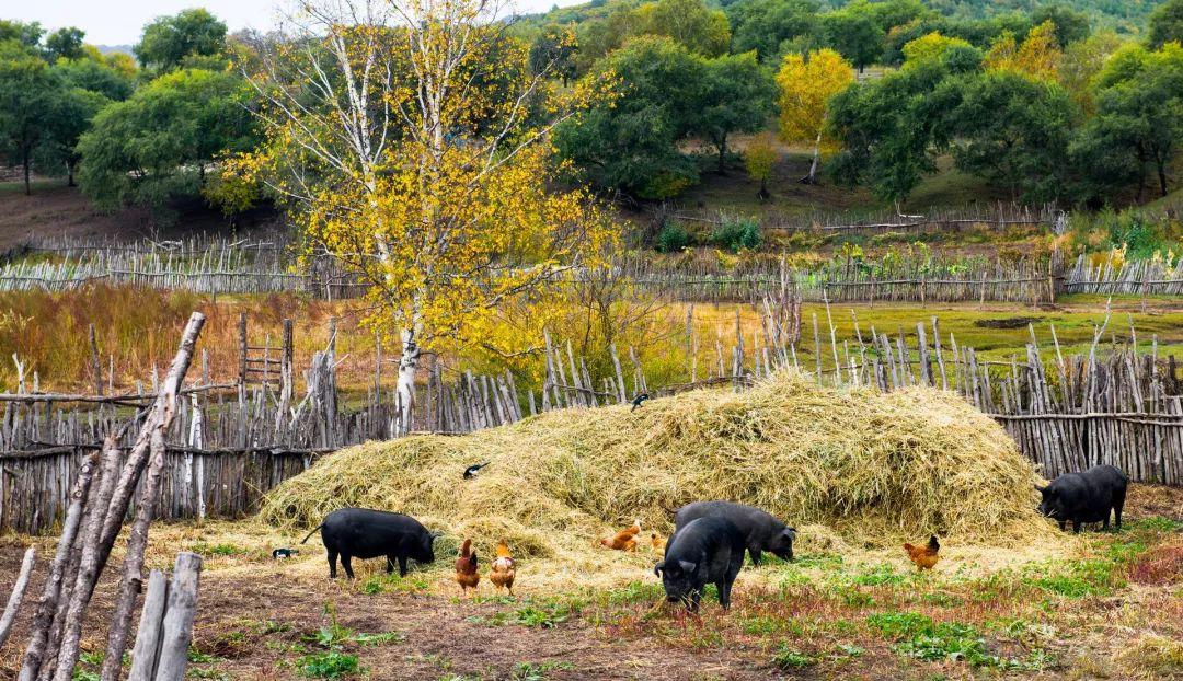 """猪肉价格上涨,环保该不该""""背锅""""?"""