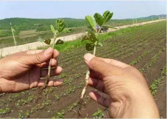 菜吧:你种植的农作物根系生长缓慢,原来是这些因素导致的!