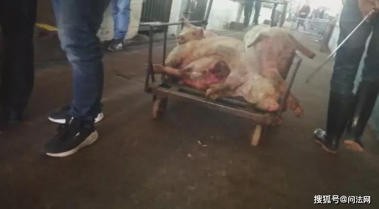 肉联厂洗白病死猪,人血馒头它香么!?