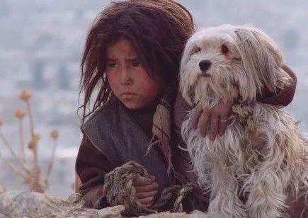 瞧这条狗,活得像人一样