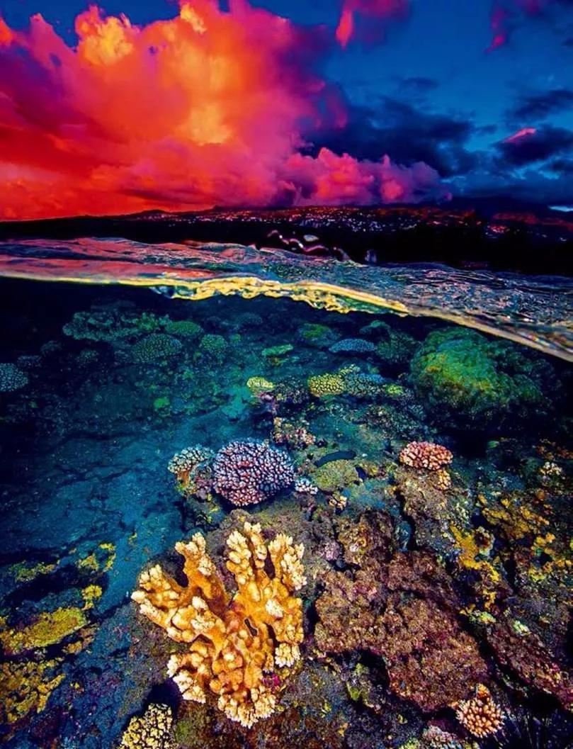 我們的海洋還能恢復生機嗎?