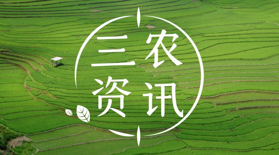 四川广元多措并举推进现代农业园区建设