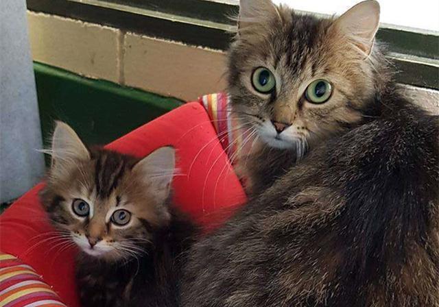 世上只有妈妈好,可母猫产后抑郁的痛苦谁知晓?
