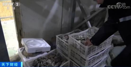 你吃的法国高端进口生蚝可能是假的!14元低端品转手卖40元_中欧新闻_欧洲中文网
