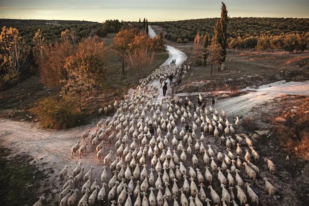 欧洲最后的牧羊人_中欧新闻_欧洲中文网