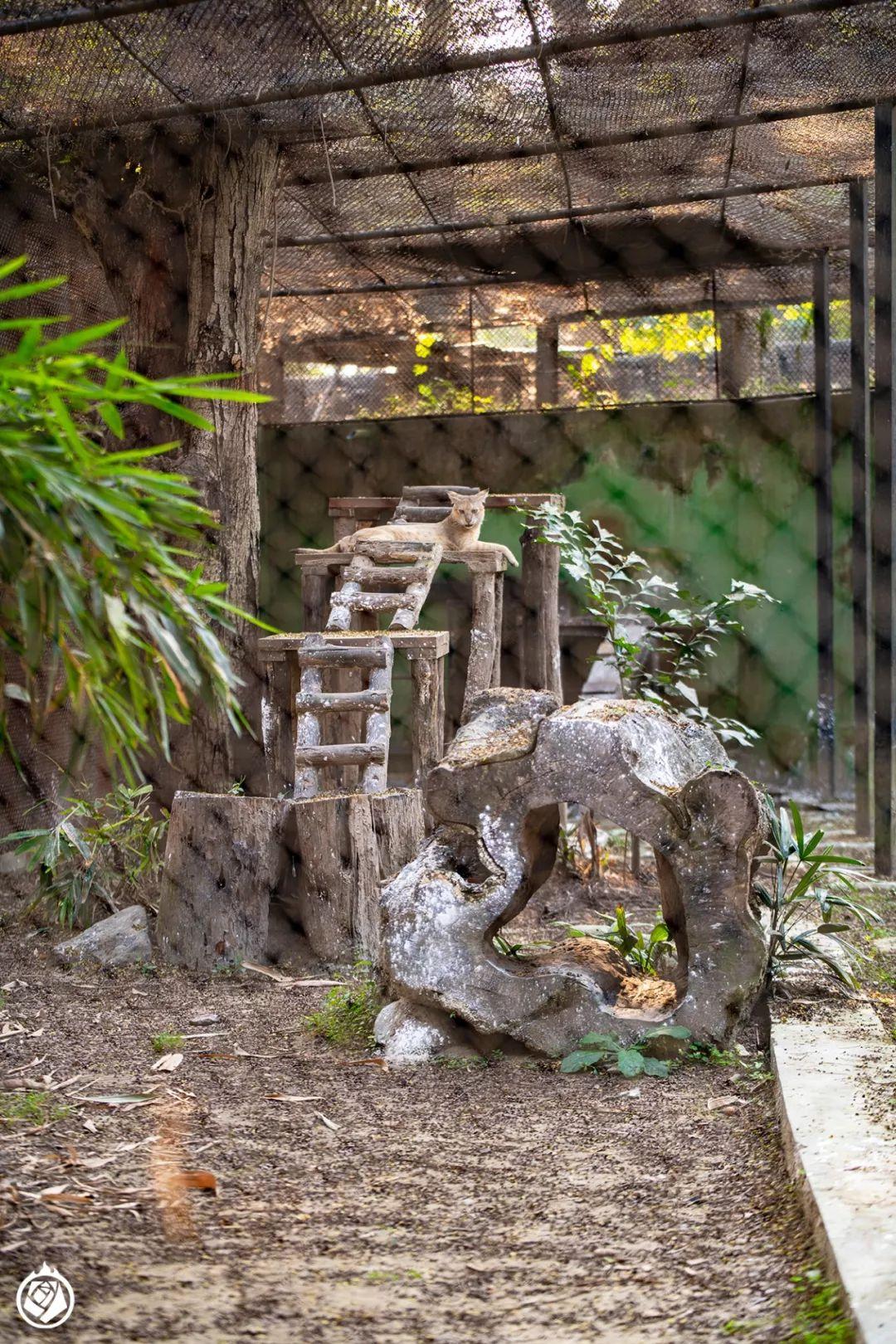 加尔各答动物园:有空又顺路,那可以随便逛一逛