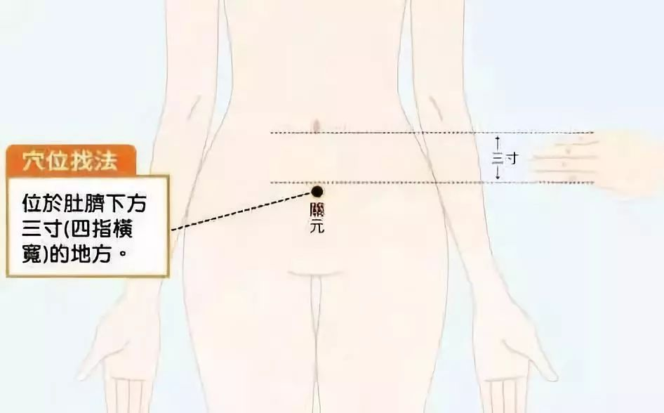人体剖面图高清肾