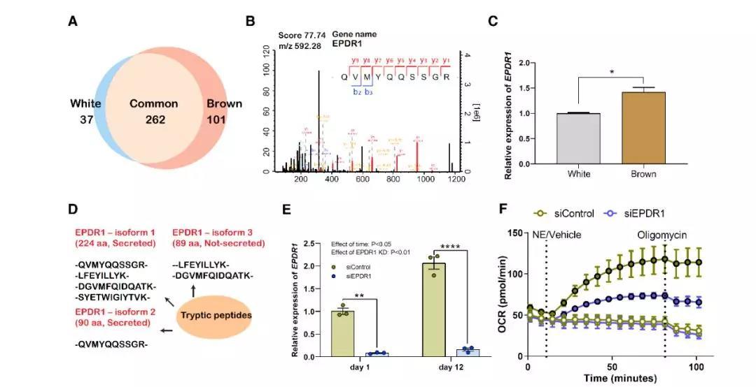 特异蛋白减压术的原理_多功能聚合物 药物二元体与细胞内的特异蛋白识别与活性调控原理图
