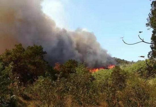 广东佛山高明区荷城街道山火已得到控制