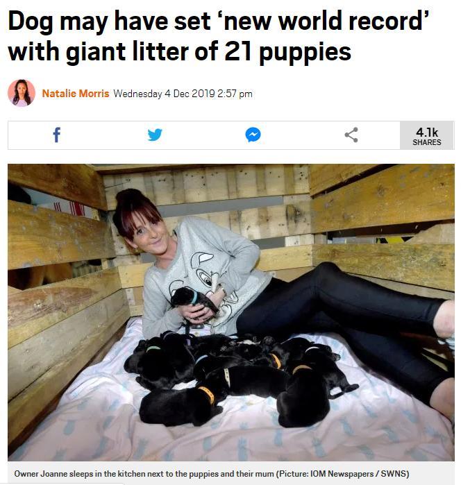 直逼世界纪录 英国狗狗一胎产下21只狗宝宝