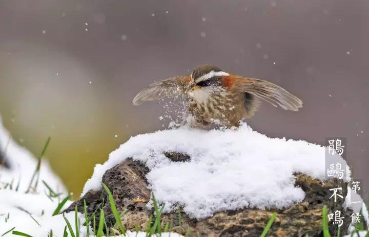<b>今日大雪 | 愿你心中暖 驱走冬日寒</b>