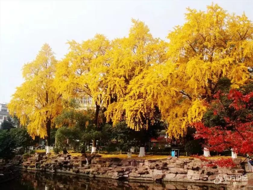 它是宁波市中心的公园,这时节美得灿烂极了~_A@qq