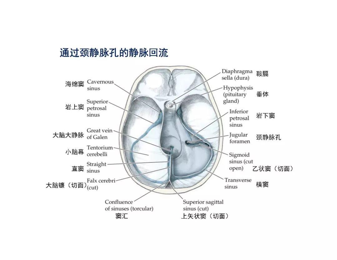 张医生大白话健康科普:一文读懂大脑半球切除术