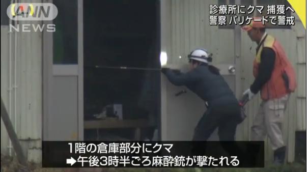 """日本""""熊母子""""被发现躺在一家诊所内 专家:它们或选在这冬眠"""